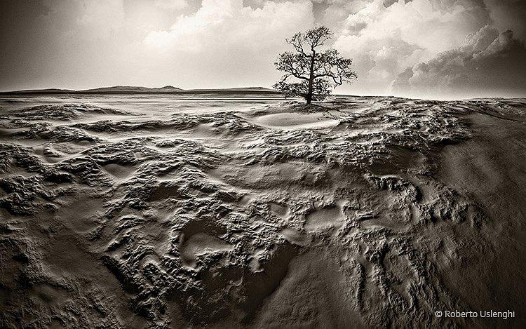 Paesaggio-albero.jpg